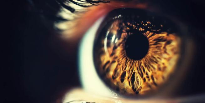 Brown iris