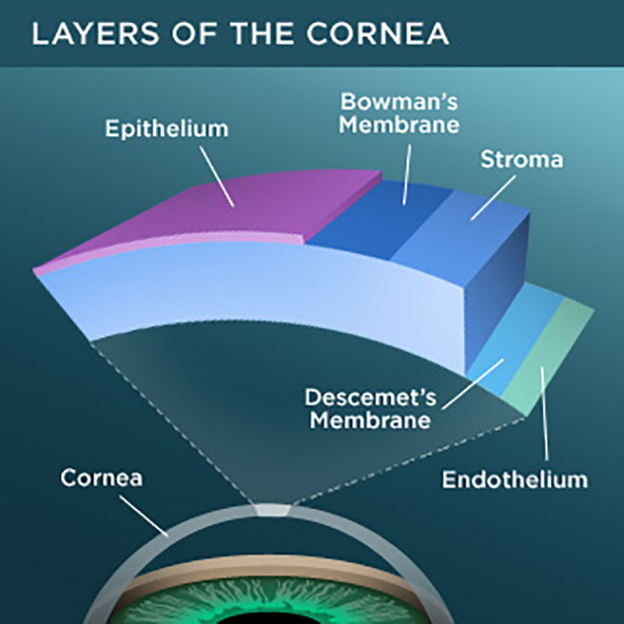diagram showing layers of the cornea